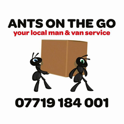 Ants on the go
